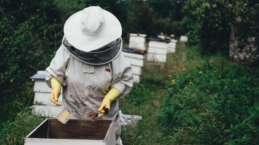 "Se ""vacunan"" con abejas contra Covid-19 en Estado de México(Pixabay)"