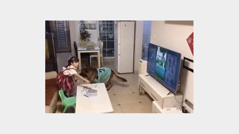 Este perro le avisa a su dueña cuando alguien se acerca(Twitter)