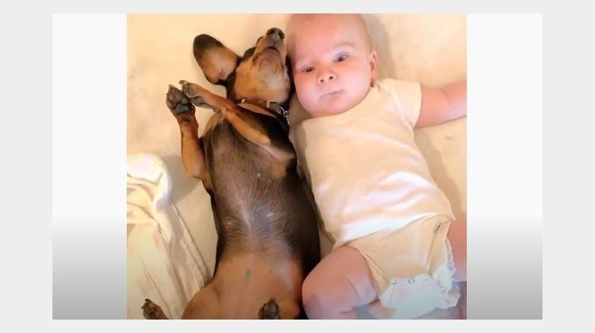Bebé y perrito conviven de una manera muy especial(YouTube)