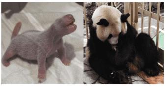 El cachorrito momentos después de nacer y su madre Rauhin.