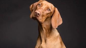 Conoce el peso ideal de tu perro, evita esos kilos de más y cuida de su salud