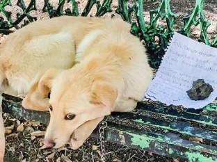 Un perro fue abandonado junto a una nota donde explicaban los motivos que lo llevaron a dejarlo solo