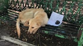 El perro sufría de maltrato y fue abandonado encadenado a una banca.