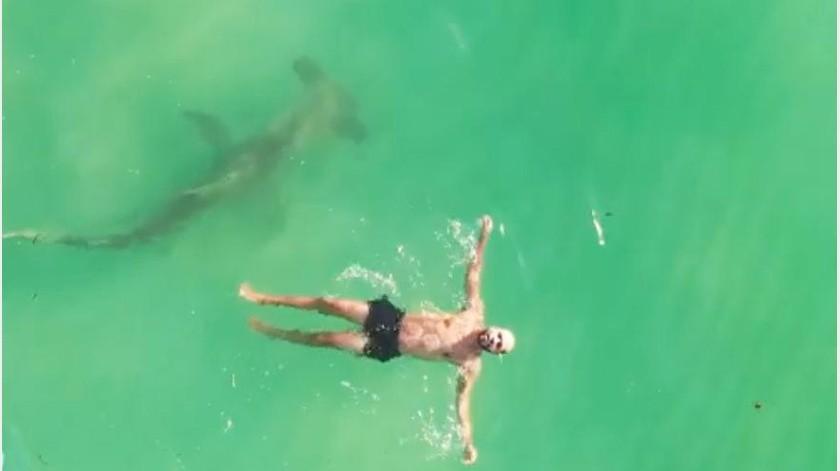 Tiburón martillo rodea a un nadador(Tomada de la red)