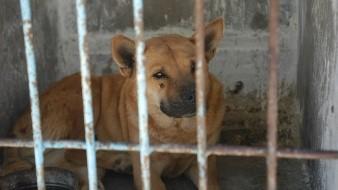 Con frecuencia se dan incidentes relacionados con perros, ante la falta de cuidado por sus propietarios.