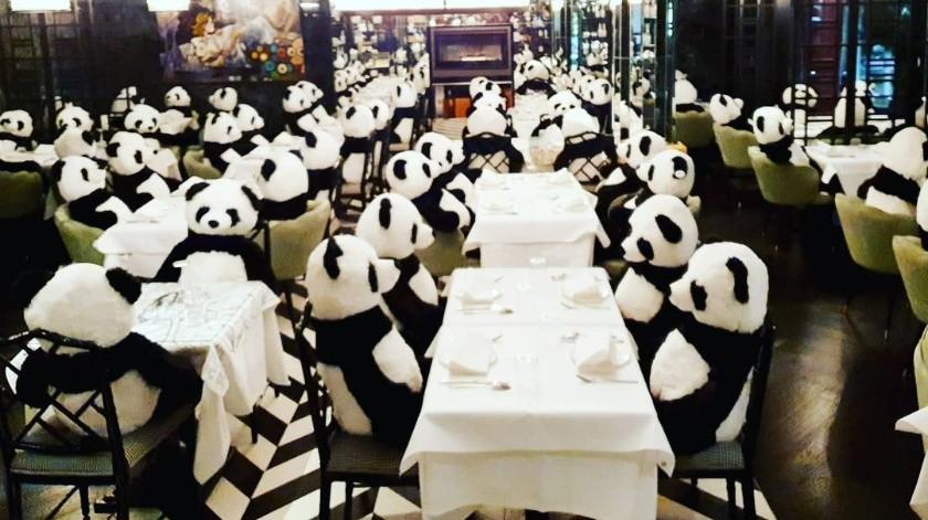 Restaurante protesta contra cuarentena con ositos de peluche