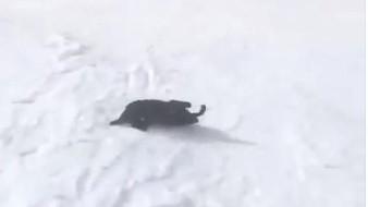 Este perro es feliz al ver la nieve