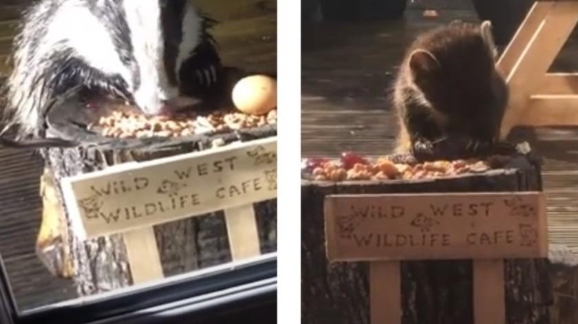 Para alimentar a los animales silvestres, mujer pone 'cafetería' en su jardín