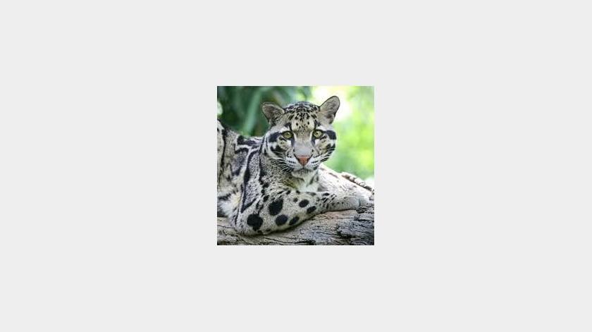 Encuentran especie en peligro de extinción en Tailandia(Tomada de la red)