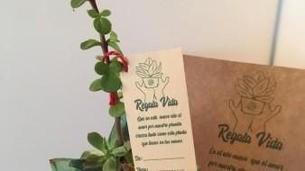 En Navidad también se pueden regalar productos ecológicos