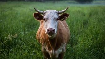 Es Sonora líder en laexportación de ganado