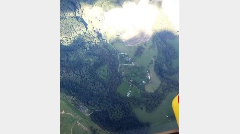 Capta el corazón de un bosque en Nueva Zelanda(Tomado de la red)