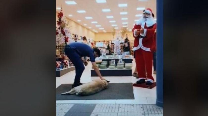 Joven se viraliza por la manera en que trata a este perro callejero(Instagram)
