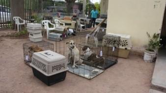 Cinco perros han dado positivo al Covid en la Ciudad de México y Estado de México