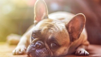 Por abusar de perro, deberá pagar 5 mil 700 pesos a dueño de