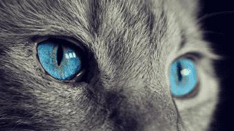 Otro estado permitirá que policía entre a casas para rescatar a mascotas de maltrato