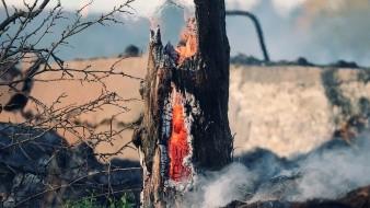 Tras el incendio se desencadenaron diversos eventos que provocaron el corte de energía eléctrica, enuméro Carlos Meléndez, director del Cenace.