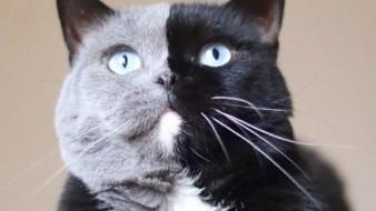 El gatito bicolor que causa sensación en redes