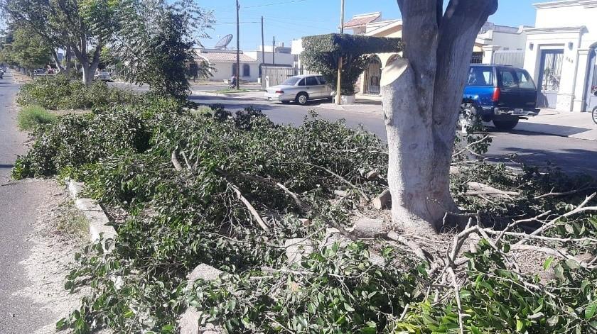 Temen vecinos de la colonia Chapultepec quedarse sin árboles(Mayra Echeverría)
