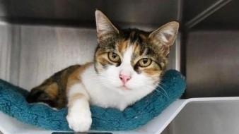 Aparece gato luego de 3 años perdido después del desastre de California