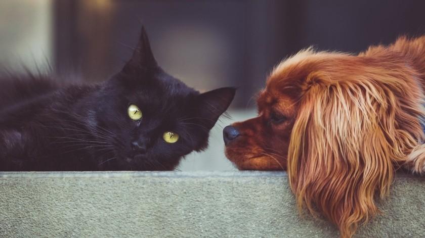 Los propietarios de mascotas han experimentado la misma escasez con diferentes medicamentos(Pixabay)