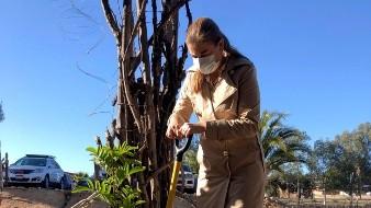 Inician la reforestación con 4 mil árboles en el Valle de Guadalupe