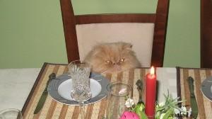 Quince personas se contagian de Covid-19 tras asistir a cumpleaños de gato