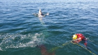 Marina Armada rescata a ballena enredada