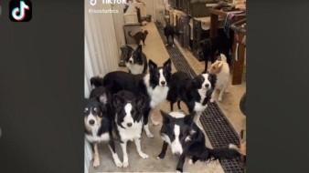 Perros demuestra obediencia ante su dueña