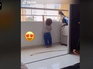 Gato protege al bebé de su dueña
