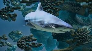Vacuna anti-covid aniquilaría medio millón de tiburones