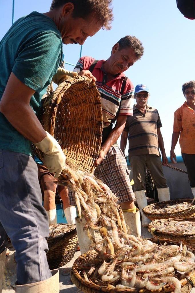 Se 'encochan' pescadores de altura de camarón